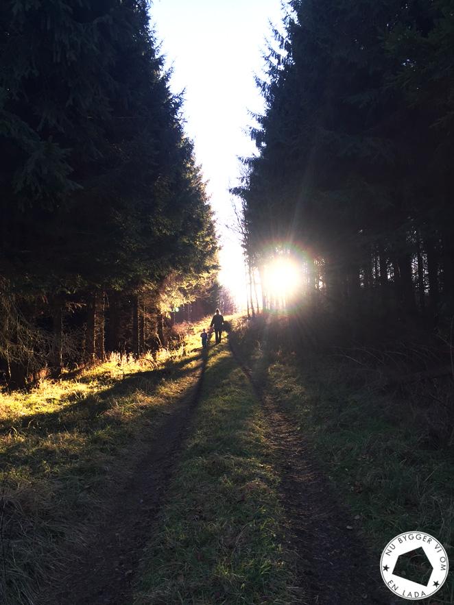 skogen05